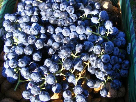 Otelló szőlő  alatta dió és mandula