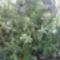 Fénykép 0180 tarlóvirág