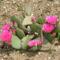 Kaktusz a sziklakertben
