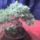 Bonsai-002_1144100_4405_t