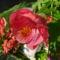 Csere-bere virágaim Babitól és Évától 1