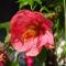 Csere-bere virágaim Babitól és Évától 5