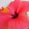 Csere-bere virágaim Babitól és Évától 6