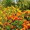 Szeptemberi virágok 3