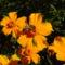 Szeptemberi virágok 5