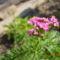 Szeptemberi virágok 6
