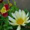 Szeptemberi virágok 8