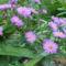 Szeptemberi virágok 9