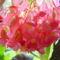 virág 015