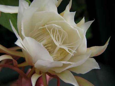 1 szál virág