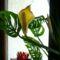 szobanövény 3