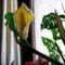 szobanövény 4