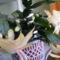 Fehér karácsonyi kaktusom