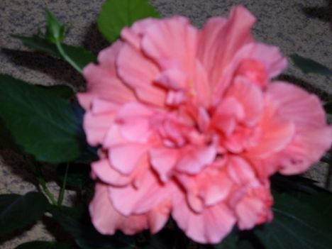 Virágos, nyárvége 19