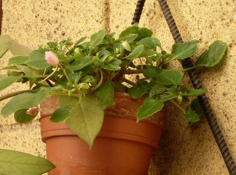 Virágos, nyárvége 20