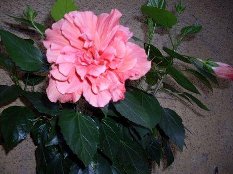 Virágos, nyárvége 21