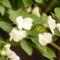 Virágos, nyárvége 2