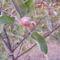 Ezek a kis almák most ősszel lettek a kis fákon
