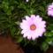 Szél virág2