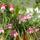 októberi virágok