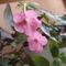virág 014