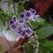 virág 020