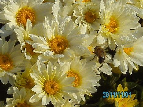 Egy kis virág november 1-én a kertből.