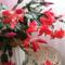 Piros kaktuszom