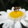 Pollen_collection_1165848_7946_t