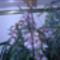orchidea kiállítás 2011. nov.05. 023
