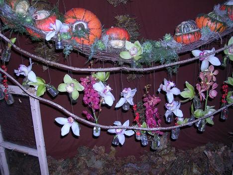orchidea kiállítás 2011. nov.05. 026