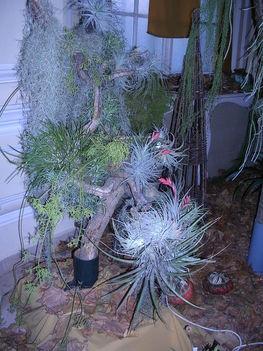 orchidea kiállítás 2011. nov.05. 029
