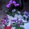 orchidea kiállítás 2011. nov.05. 043