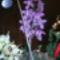 orchidea kiállítás 2011. nov.05. 044