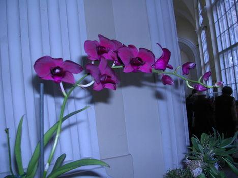 orchidea kiállítás 2011. nov.05. 048
