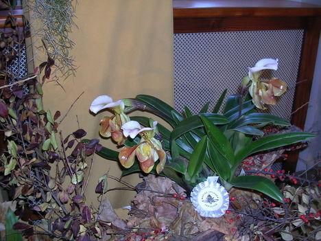 orchidea kiállítás 2011. nov.05. 104