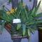 orchidea kiállítás 2011. nov.05. 105