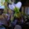 orchidea kiállítás 2011. nov.05. 207