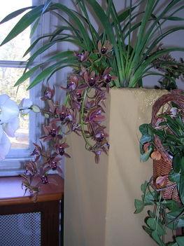 orchidea kiállítás 2011. nov.05. 244