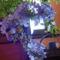 virág 010 Fokföldi ólomvirág