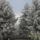 csodálatos tél