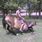 lovaskocsin tel 023