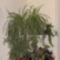 Növények a konyhában 2
