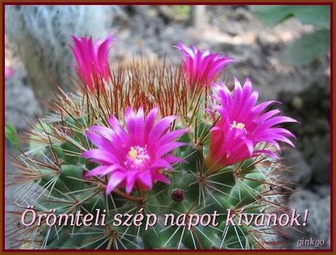 http://pctrs.network.hu/picture/1/1/9/_/szep_kepes_lapok_1_1109530_9922.jpg