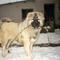 Arni kutyám