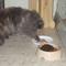 Bella kézzel eszik