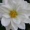 Bence virágja 1