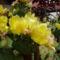 Csodálatos kaktusz-virág