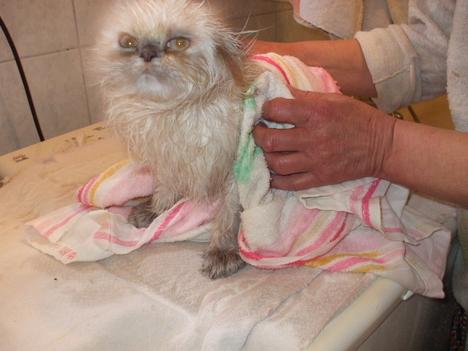 Guszti szeret fürödni