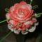 rózsa körbe bimbókkal